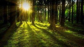 nature-3294681_1280